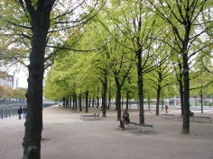 Linden Trees